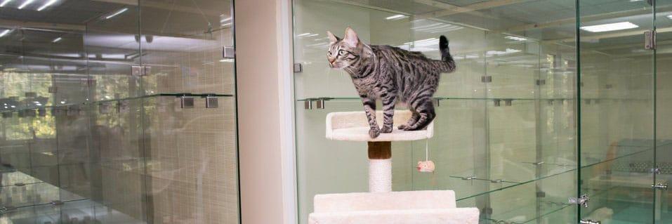 Забронировать гостиницу для кошек и котов