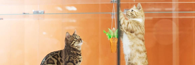 Гостиница для кошек в Москве СЗАО