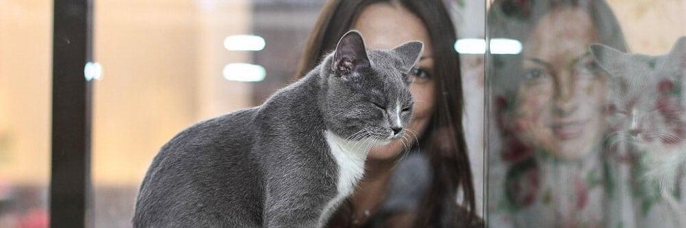 Гостиница для кошек в Новой Москве