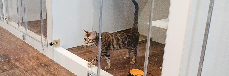 Отель для кошек — Люберцы