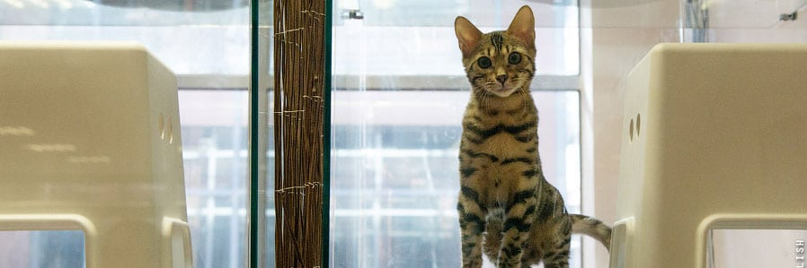 Передержка кошек в Одинцово