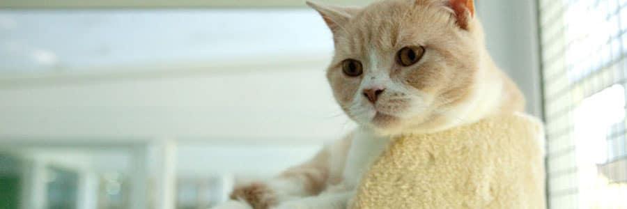 Передержка кошек в Красногорске