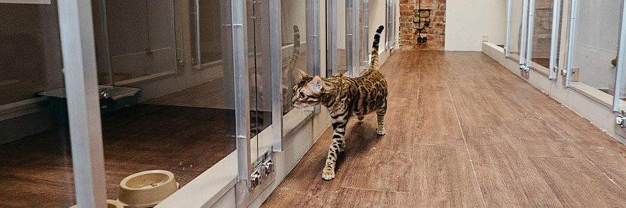Передержка кошек в Лобне недорого