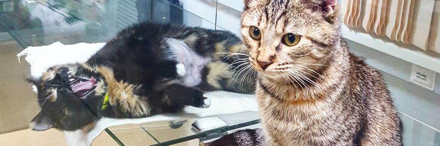 Передержка кошек в Люберцах