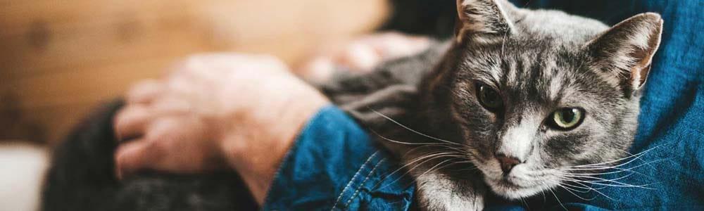 Куда оставить кошку на время отпуска
