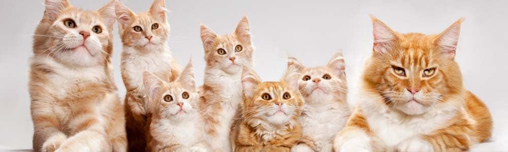 Преимущества гостиницы Сэр-кот перед Котель