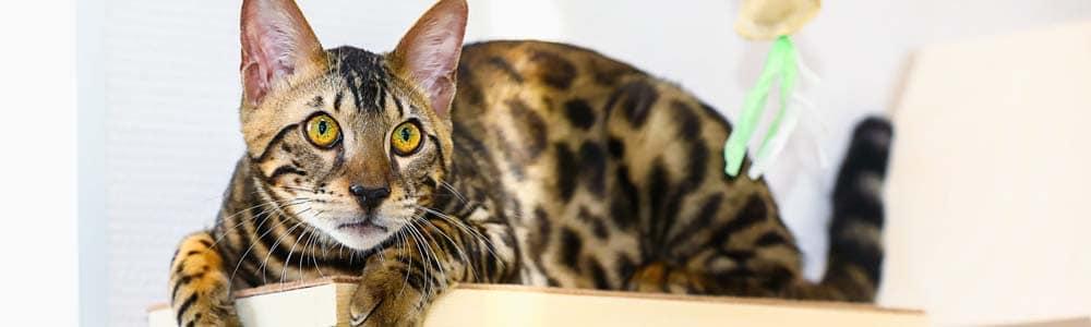 Взять кота на передержку в Москве