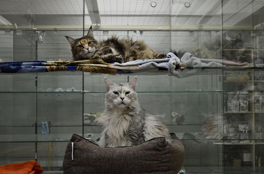 Передержка домашних животных в Москве