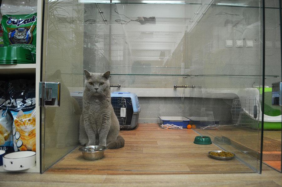Передержка животных на дому