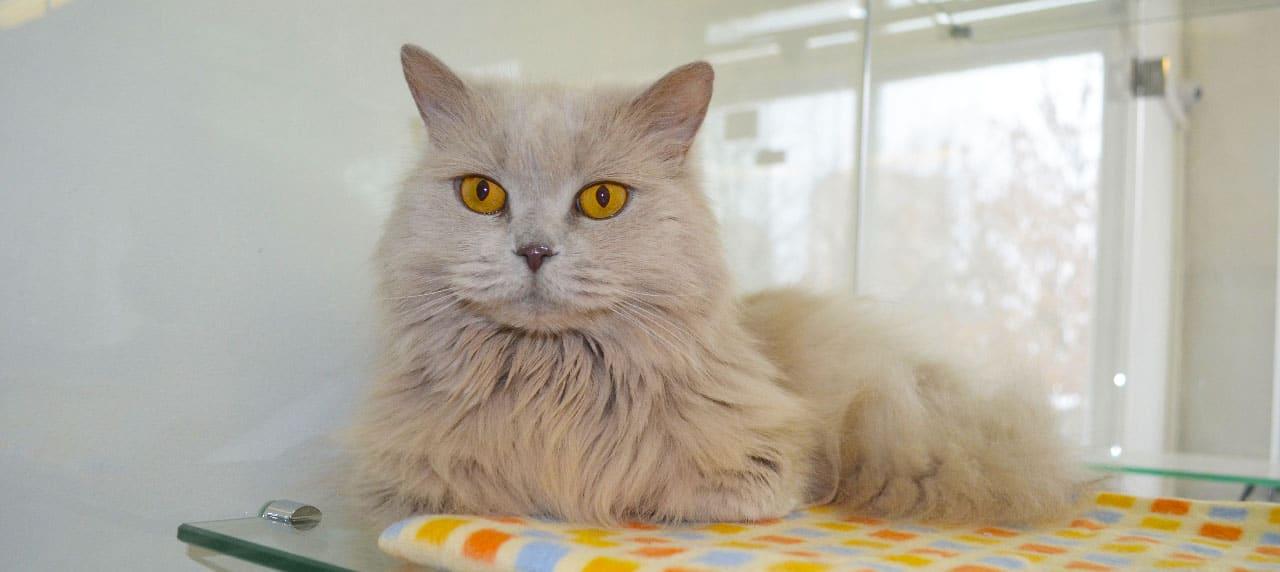 Передержка кошек - отзывы