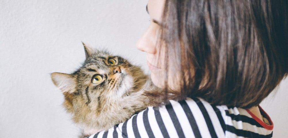 Сдать кота на передержку
