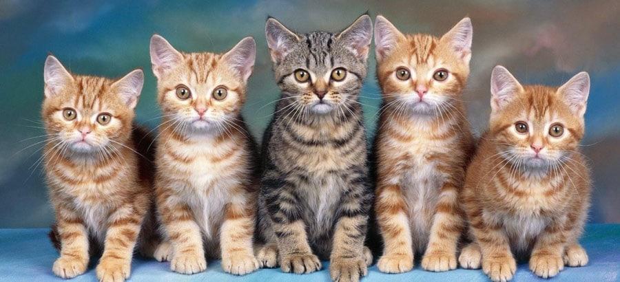 Недорогая гостиница для кошек