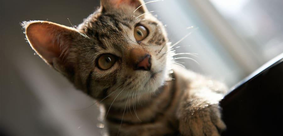 Отзывы на гостиницы для кошек в СПБ