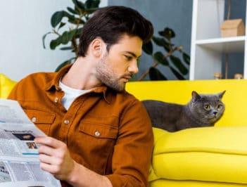 Сколько стоит гостиница для кошек