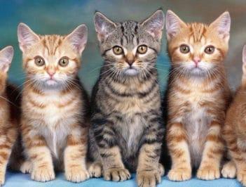 Стоимость передержки кошек в Санкт-Петербурге