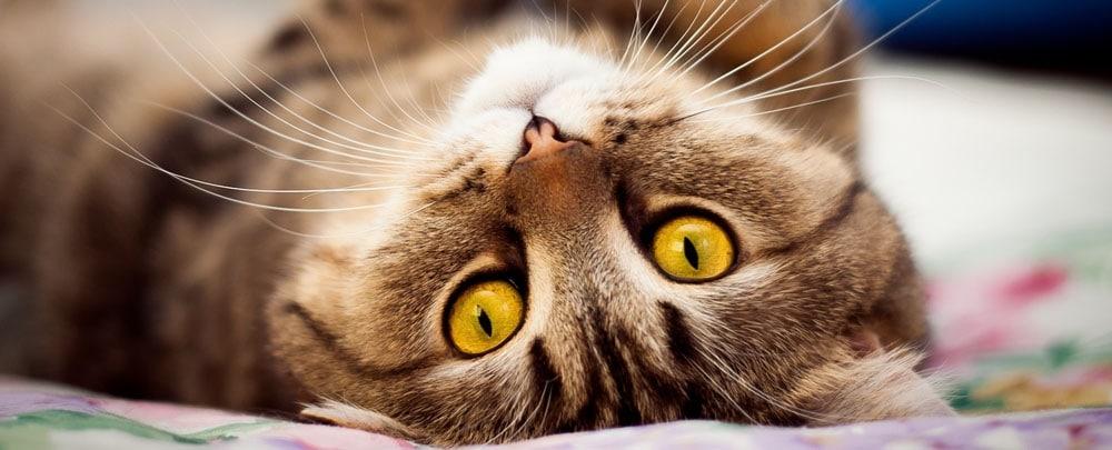 Отдать кошку на передержку в Домодедово
