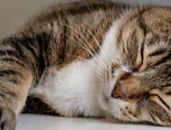 Отдать кошку на передержку в Балашихе