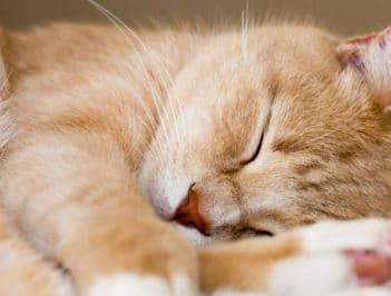 Отель для кошек в Лобне