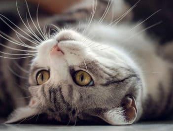 Передержка кошек в Балашихе